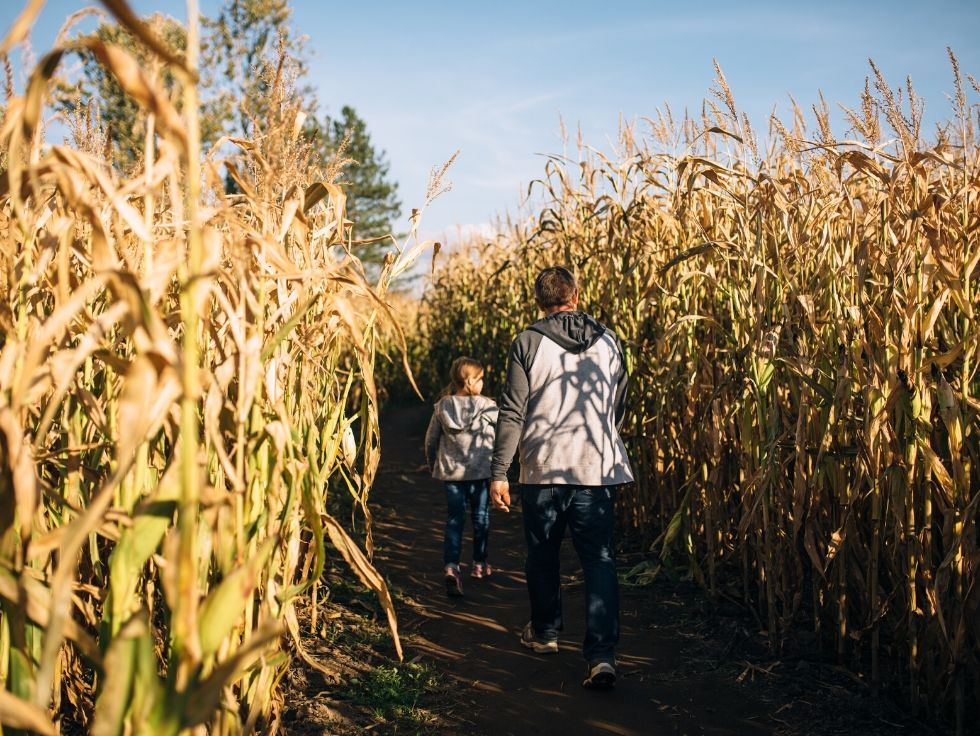 father and daughter having fun exploring a corn maze in Colorado in the late afternoon
