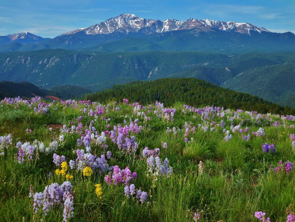 View of Colorado mountains and beautiful wildflowers | The Canyons