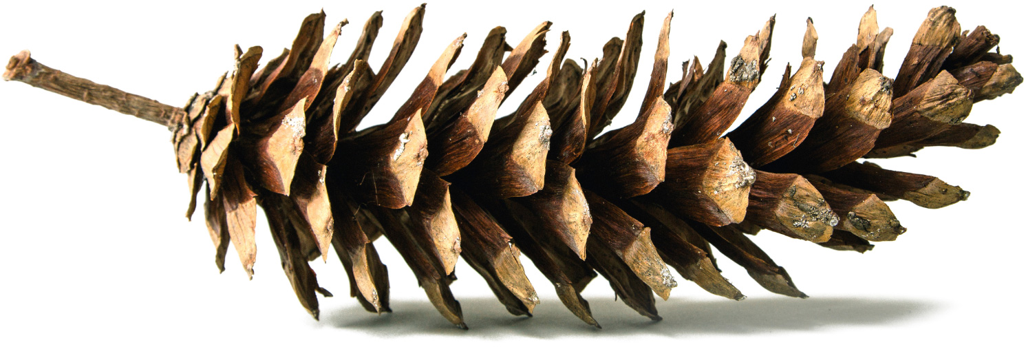 Pinecone - Enjoy the Beauty of Castle Pines | The Canyons, New Homes in Castle Pines, Co